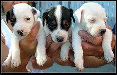 Got puppies?  Gotta have vinegar!