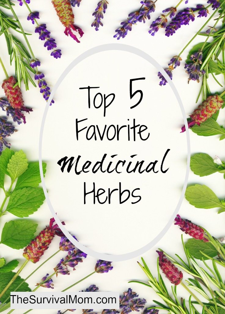Learn to use these 5 simple medicinal herbs for everyday ailments. | via www.TheSurvivalMom.com