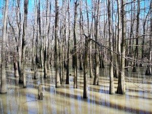 swamp Self Rescue: When Staying Put to Survive Isn't an Option