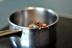frog in a pot Normalcy Bias: Its All in Your Head