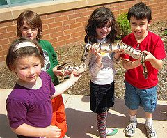 children and snake Q&A: Advice to a homeschool wannabe