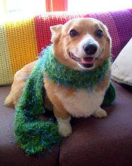 dog with scarf February Skill of the Month:  Knit and Crochet!