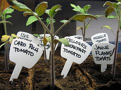 VID:Start those seeds indoors with toilet paper rolls! – 2/14/12