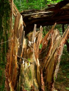 INSTANT SURVIVAL TIP: Firewood Tricks