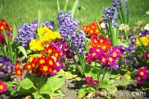 12_13_4-Flowers-in-a-Garden-Border_web