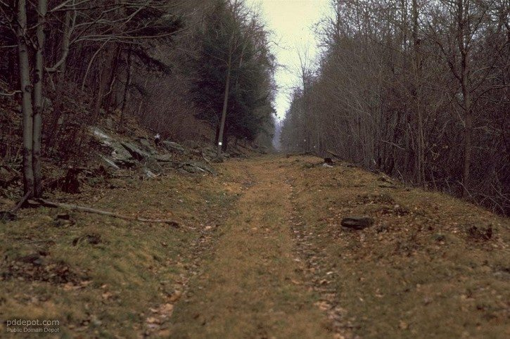 wild-road-deep-in-forest_w725_h4821