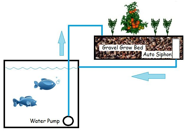 An aquaponic system can provide a healthy food source, forever
