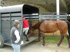 Evacuating the big guys — horses and other large livestock