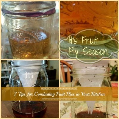 7 Tips for Combating Fruit Flies in Your Kitchen