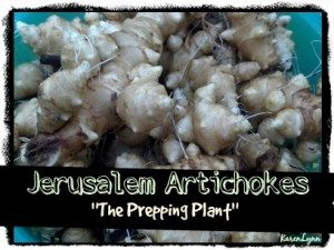 Karen Lynn - Jerusalem Artichokes - The Prepping Plant
