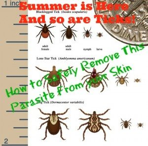 How To Safely Remove Ticks From Your Skin