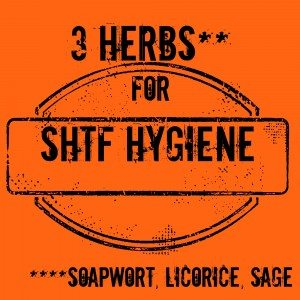 3 Herbs for SHTF Hygiene