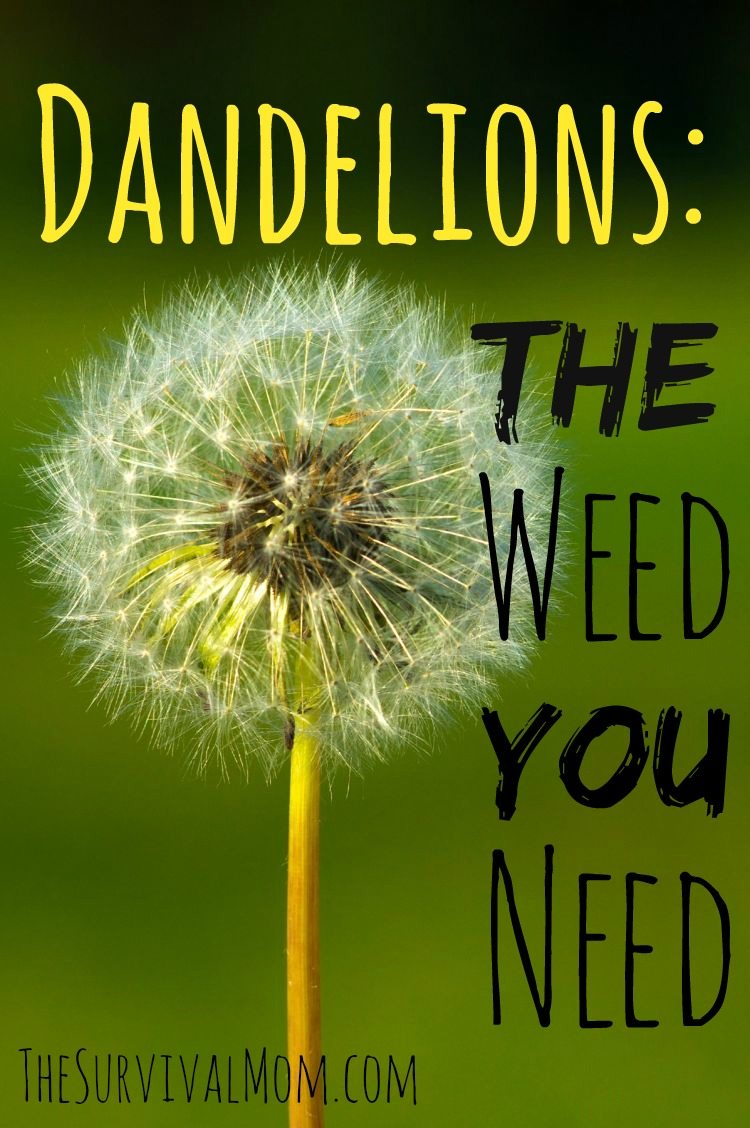 Benefits of dandelions.