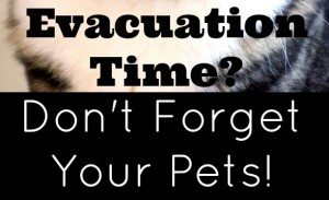 Evacuation Time? Don't Forget Your Pets!