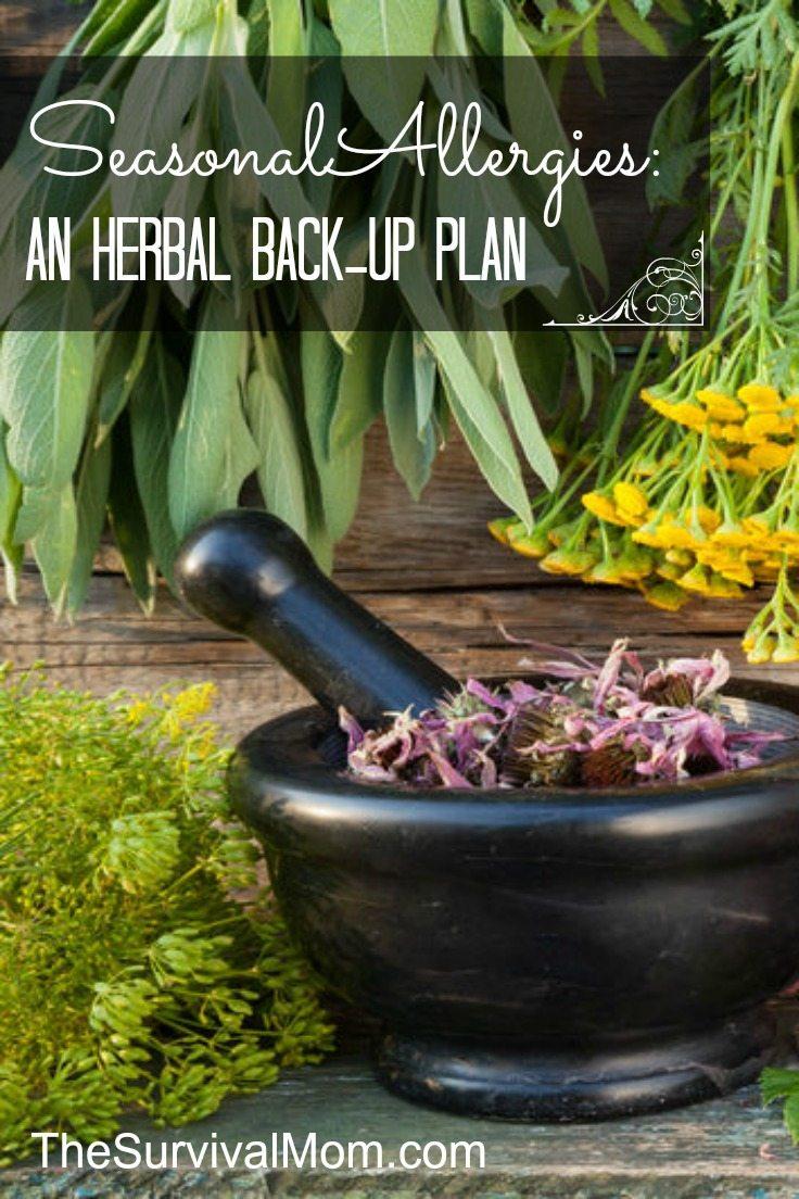 Herbs for Seasonal Allergies