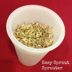 Get started sprouting seeds