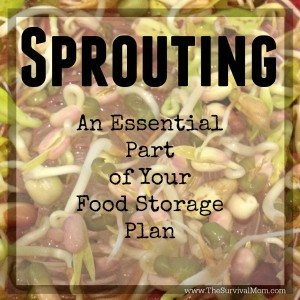 Sprouting Seeds – An Essential Part of Your Food Storage Plan