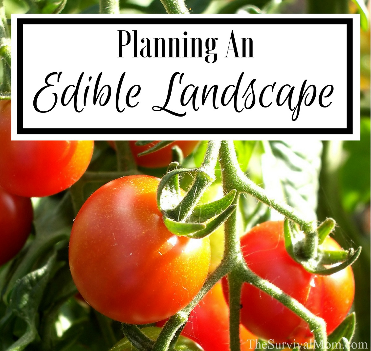 Planning An Edible Landscape via The Survival Mom