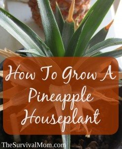 How To Grow A Houseplant From The Top Of A Pineapple