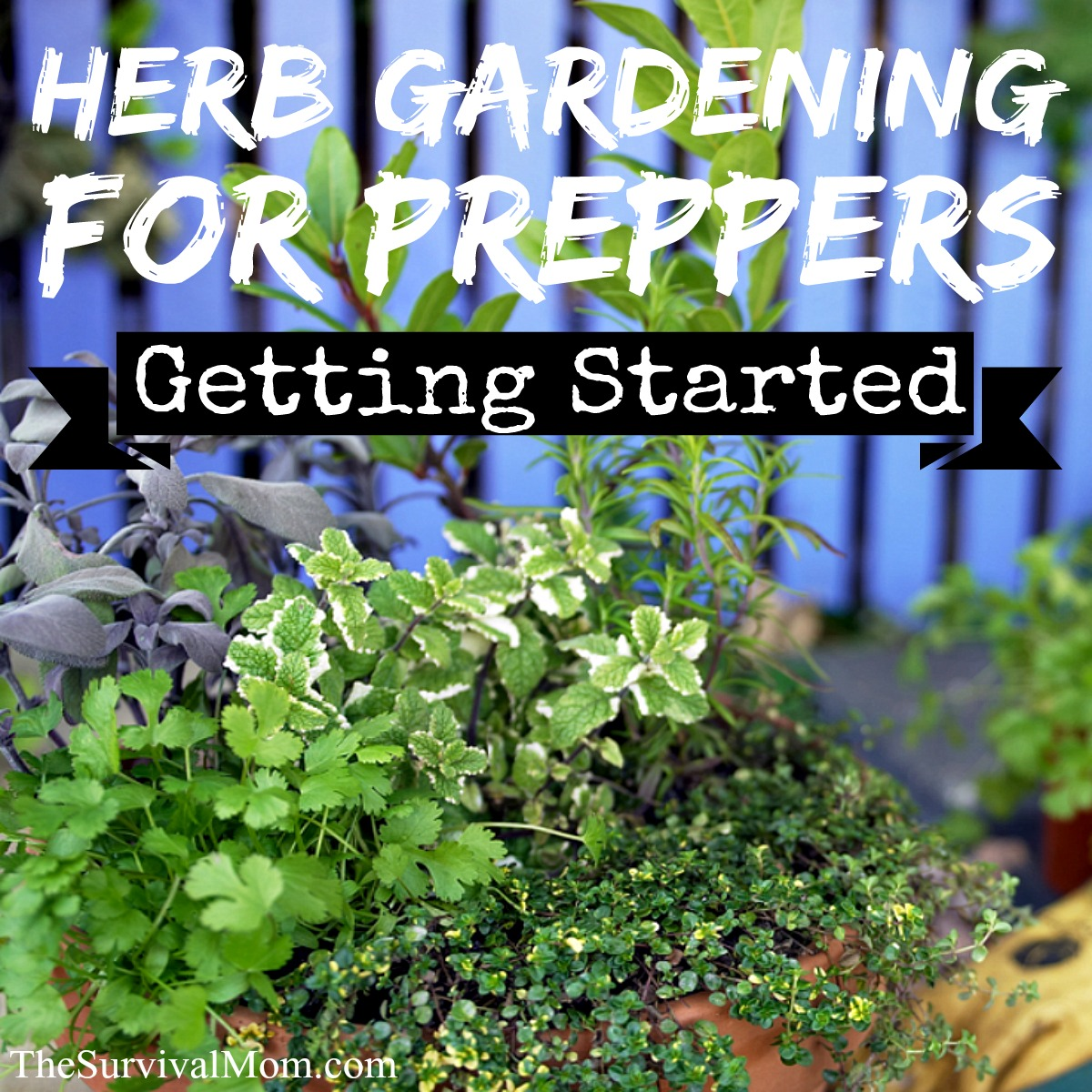 herb gardening for preppers