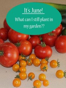 It's June! Mid to Late Summer Vegetable Gardening