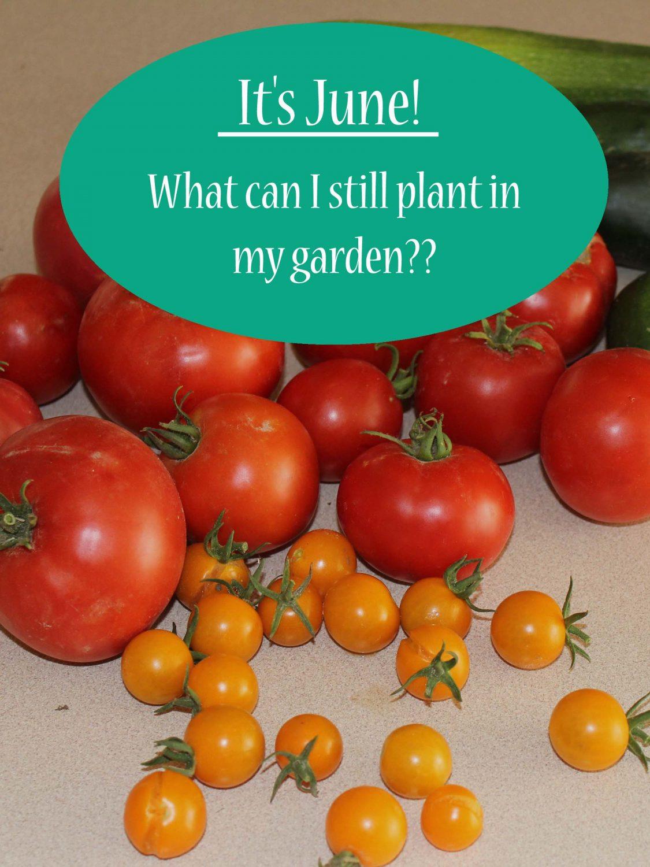 Unprotected in summer garden