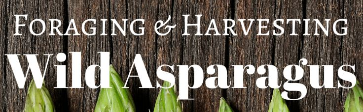 Foraging wild asparagus