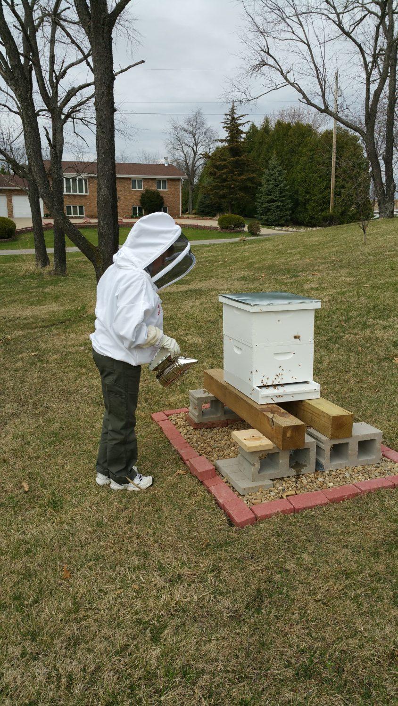 Beekeeping For Beginners Survival Mom - Backyard beekeeping for beginners