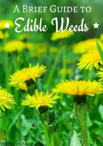 A Brief Guide To Edible Weeds