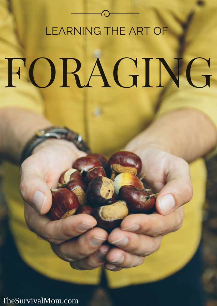 how to forage