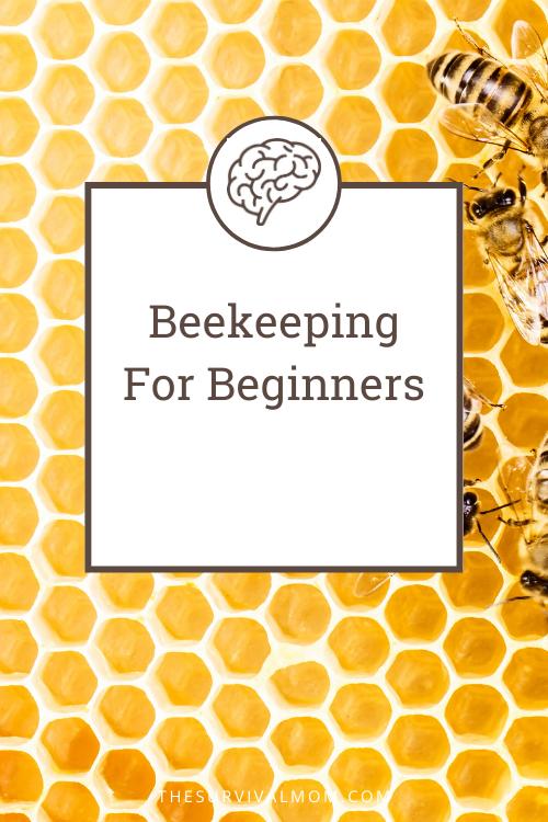 image: honeycomb, bees, beekeeping, beehive