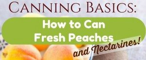 Canning Basics: How to Can Peaches and Nectarines