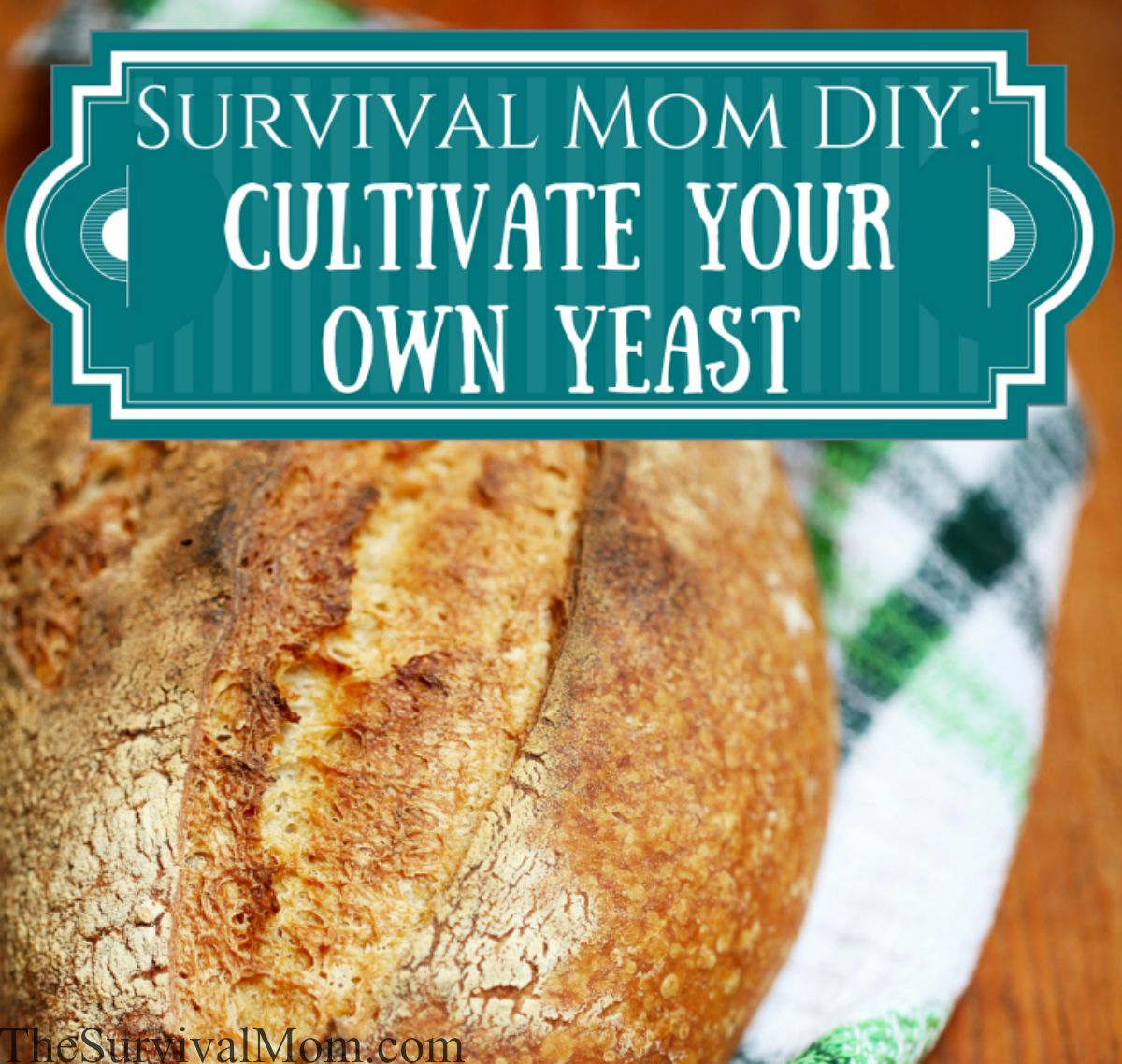 how to cultivate yeast
