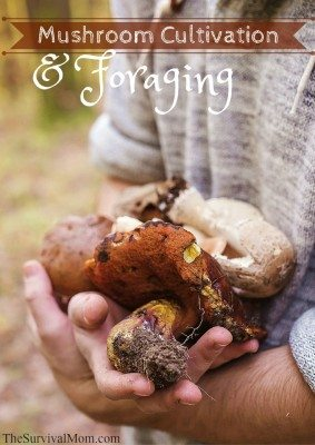 Mushroom Cultivation & Foraging