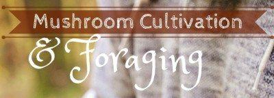 Mushroom Cultivation & Foraging