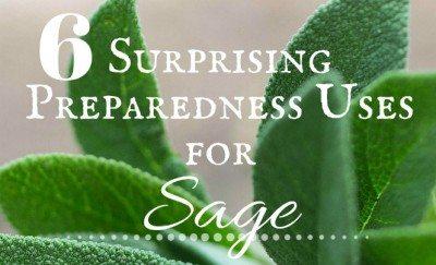 6 Surprising Preparedness Uses for Sage