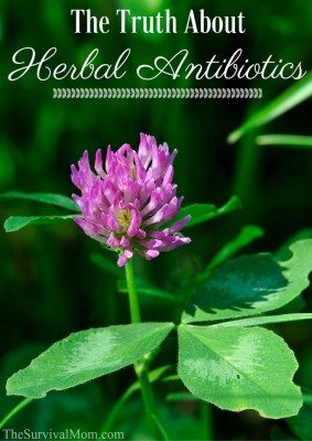 The Truth About Herbal Antibiotics