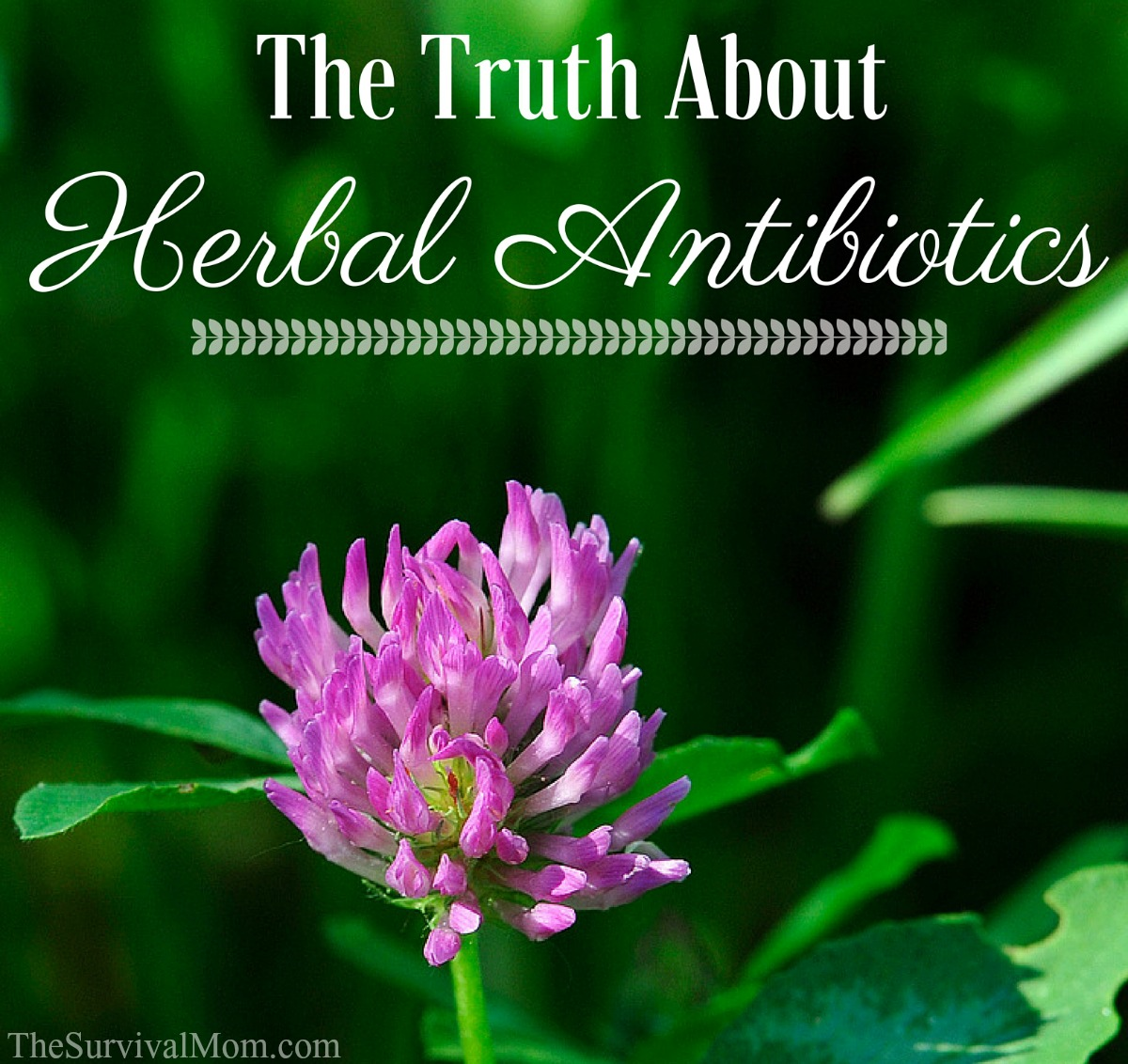 herbal antibiotics FB size