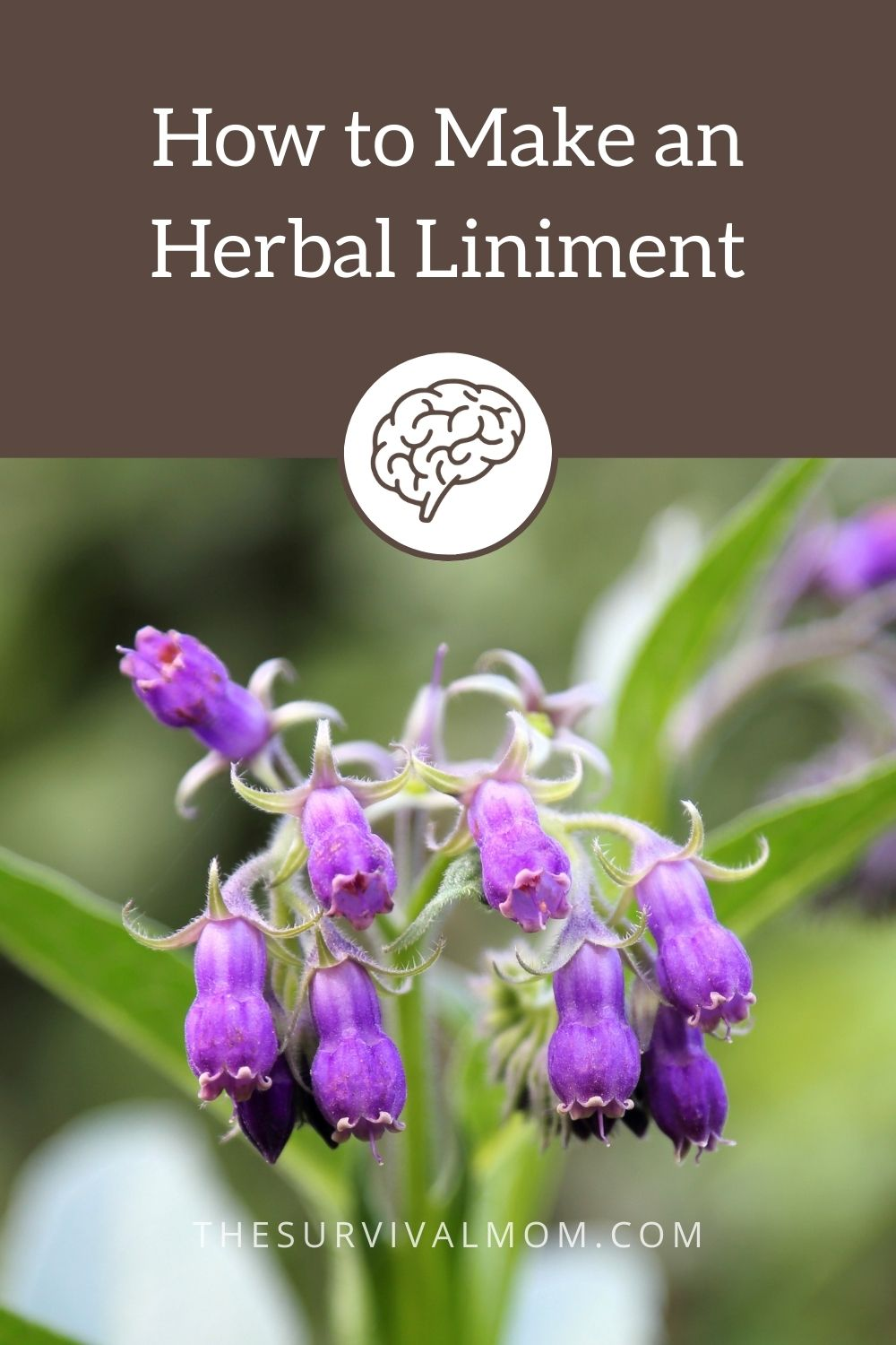 How to Make an Herbal Liniment via The Survival Mom