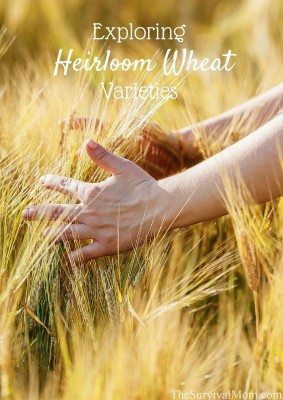 Exploring Heirloom Wheat Varieties