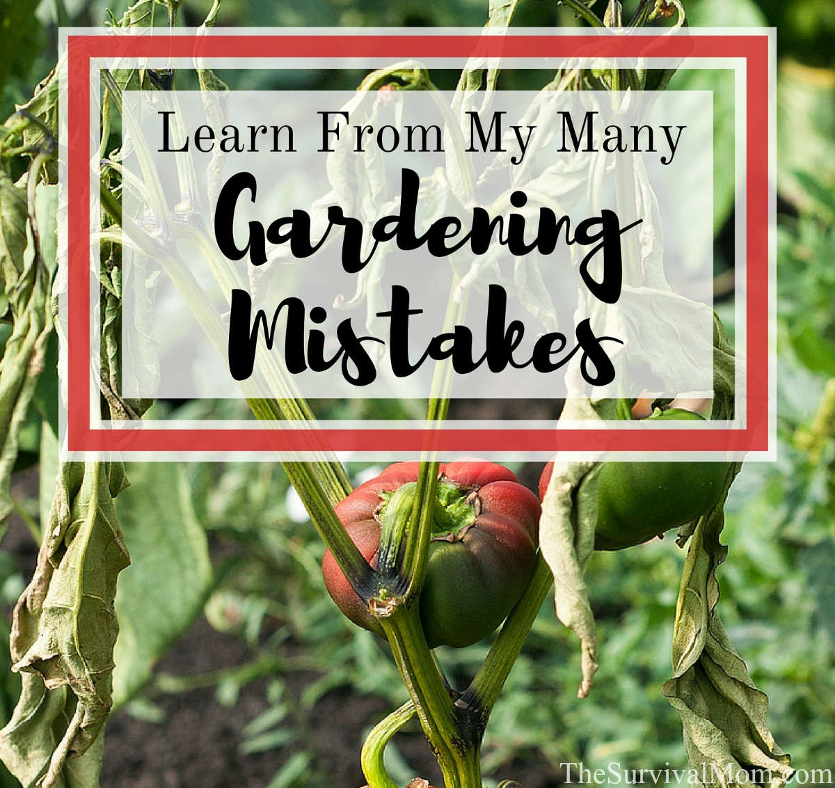 Learn From My Many Gardening Mistakes