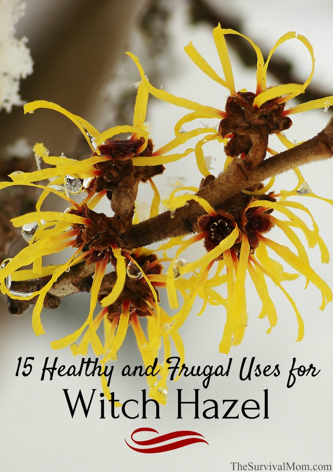 15 Healthy & Frugal Uses for Witch Hazel GIVEAWAY!