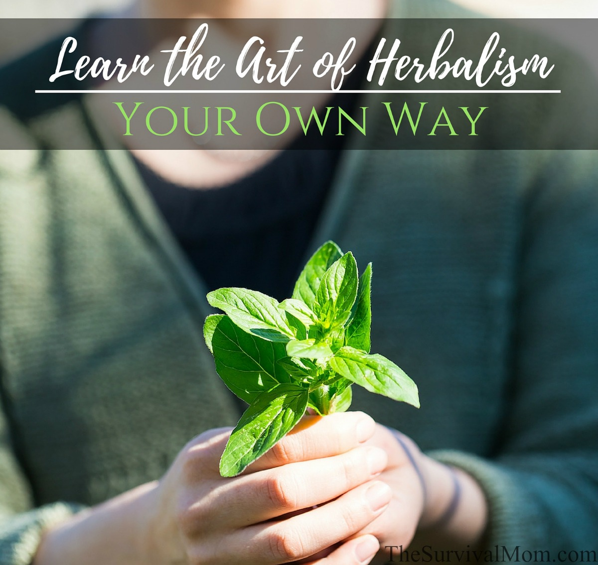 learn about herbalism, how to be an herbalist, herbalist training, best herbalist school