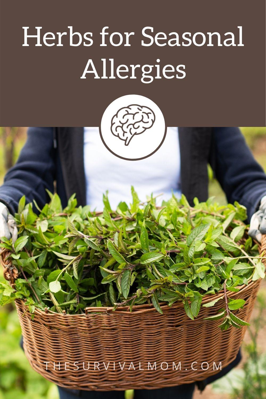 Herbs for Seasonal Allergies via The Survival Mom