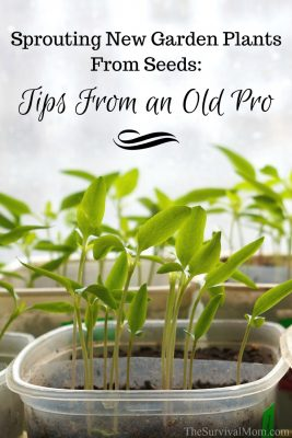 Sprouting new garden plants from seeds: tips from an old pro