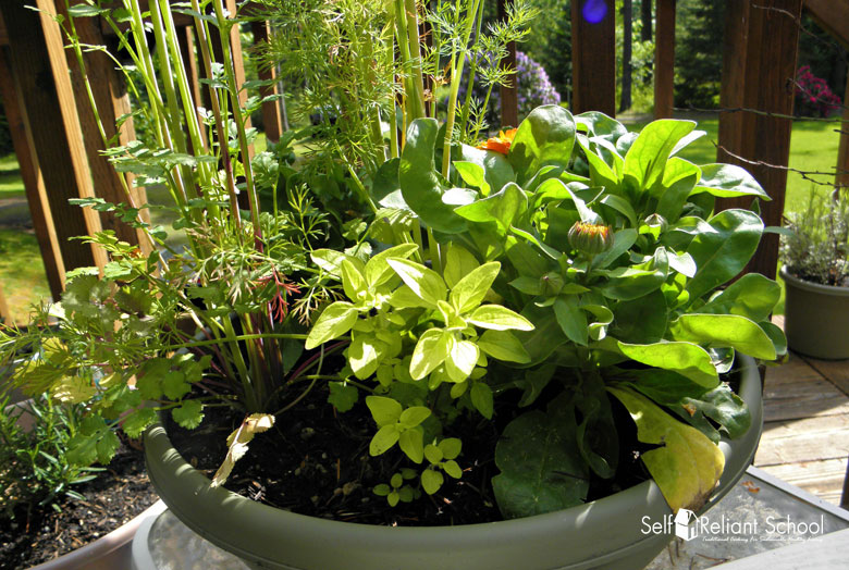 Blogger Gardening Advice, Best Gardening Tips From Bloggers