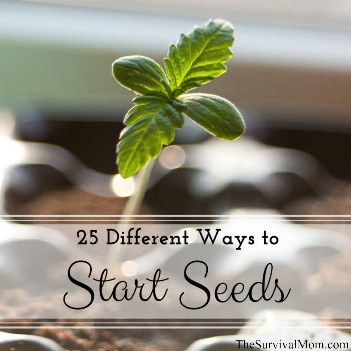 25 Different Ways to Start Seeds via The Survival Mom