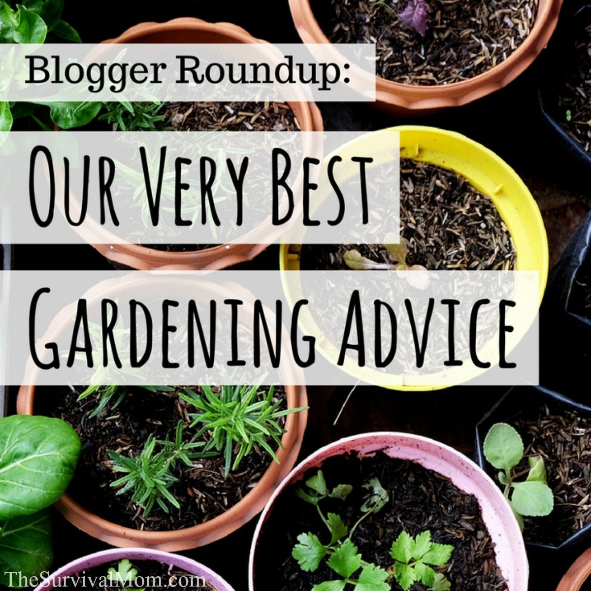 best gardening advice from bloggers