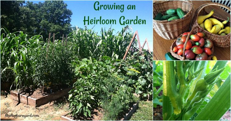 BEST BLOGGER advice for gardening, best gardening tips