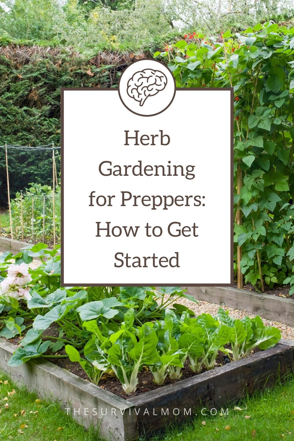 Herb Gardening for Preppers How to Get Started via The Survival Mom